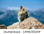 Chipmunk Sits On A Rock Eyeing...
