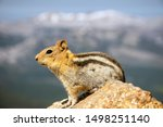 A Fat Chipmunk Sits On A Rock...