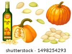 set pumpkin oil  seeds and leaf.... | Shutterstock .eps vector #1498254293