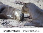One giant otter is kissing...