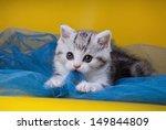 Stock photo scottish kittens cat 149844809