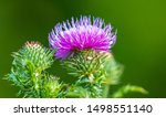 Flowers On A Spiny Plant In...