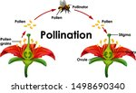 diagram showing pollination... | Shutterstock .eps vector #1498690340