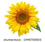 Flower Of Sunflower Isolated O...