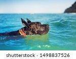 Black Great Dane On The Sea Side