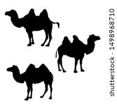 three camel silhouette vector ... | Shutterstock .eps vector #1498968710