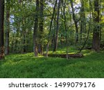 Tranquil forest with early light, Maryland Heights, Maryland