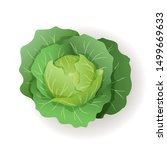 green cabbage with big leaves... | Shutterstock .eps vector #1499669633