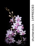 hybrid orchid  for background... | Shutterstock . vector #149983283