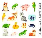 pets animals set. vector flat... | Shutterstock .eps vector #1499917643