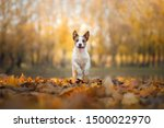 Dog In The Autumn In The Park....