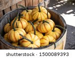 Yellow And Orange Gourds On...