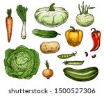 vegetable sketches  isolated...   Shutterstock .eps vector #1500527306