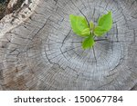 new development and renewal as... | Shutterstock . vector #150067784
