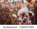 Fluffy Wild Plant In Autumn