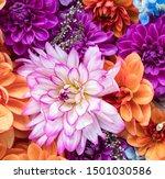 Orange And Purple Fall Flower...