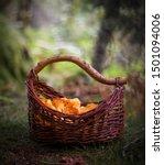 Fall Mushroom Fairytale Forest...