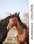 two adorable horses nuzzling... | Shutterstock . vector #150119036
