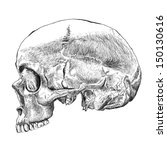 Abstract Human Skull