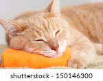 Red Tabby Cat Sleeping Isolate...