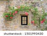 Beautiful Vine Of Pink Rose...