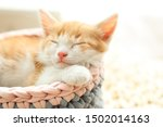Stock photo cute little red kitten sleeping in knitted basket at home 1502014163