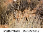 Well Camouflaged  Korhoen Hen...