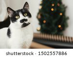 Stock photo cat with mustache looking with funny emotions on background of little christmas tree with lights 1502557886