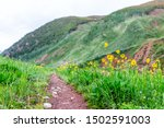 Morning with yellow flowers on path road on Conundrum Creek Trail in Aspen, Colorado in 2019 summer at trailhead - stock photo