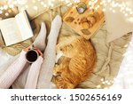 pets  hygge and people concept  ... | Shutterstock . vector #1502656169