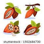 cocoa beans illustration... | Shutterstock .eps vector #1502686730