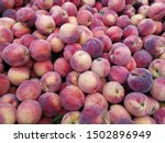 ripe and juicy Okanagan Valley peaches in the farmer