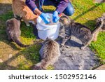 Feeding Domestic Cats. A Lot O...
