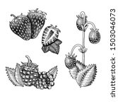 vintage hand drawn set of... | Shutterstock . vector #1503046073