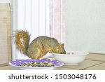The Squirrel Has Breakfast Wit...