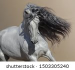 Small photo of Close up portrait of white Andalusian horse with long mane flutters on wind.