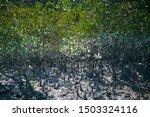 Mangrove Swamp In Sundarbans...