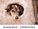 Cute Little Dog Lies...