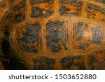 Stock photo the hexagon pattern on the tortoise shell serface this is the elongated tortoise or indotestudo 1503652880