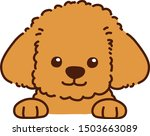 cute brown toy poodle front face | Shutterstock .eps vector #1503663089