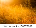 Summer Grass Meadow Close Up...