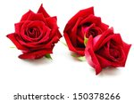 Stock photo beautiful red rose isolated on white 150378266