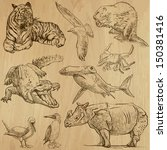 Animals Around The World  Part...