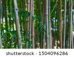 The Stalks Of Bamboo. Green...