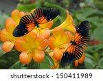 Stock photo tropical rhododendron simbu sunset flowers with doris longwing butterflies 150411989