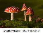 Three Toadstools Fly Agaric To...