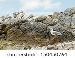 view from coast of sainte... | Shutterstock . vector #150450764