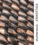 dried plasalid fish in thailand   Shutterstock . vector #1504557323