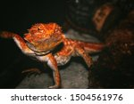 colorful lizards live in the...   Shutterstock . vector #1504561976