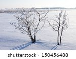 Winter Tree In A Field With A...
